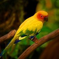 love•bird